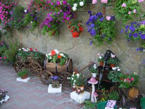 Продажа подвесных кашпо с цветами,рассада цветов (Фото) .